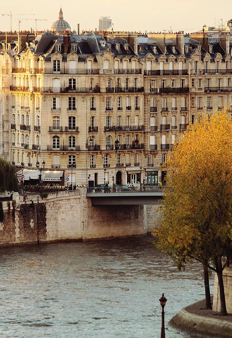 Autumn in Paris, Evening Light on the Seine, Paris Photography, Fall leaves in Paris, Ile St Louis, Fall Photography, Nature