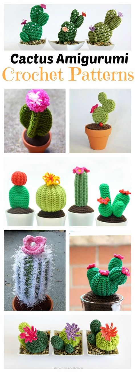 Cactus | Chica outlet | 1309x474
