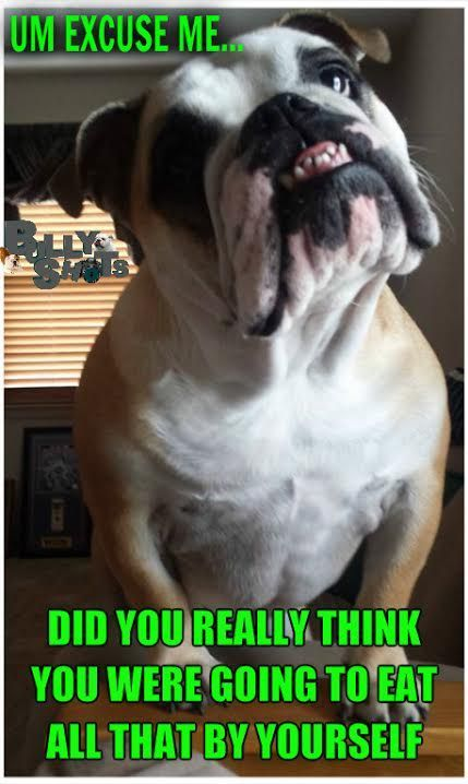 Pin On Funny Dog Pictures And Memes