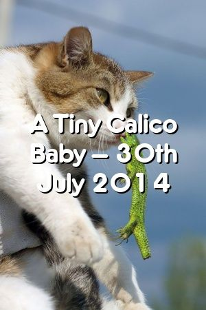 Victoria Abraham A Tiny Calico Baby 30th July 2014 In 2020 Super Cute Kittens Mama Cat Kittens Cutest