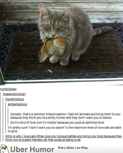 This is why I love cats….