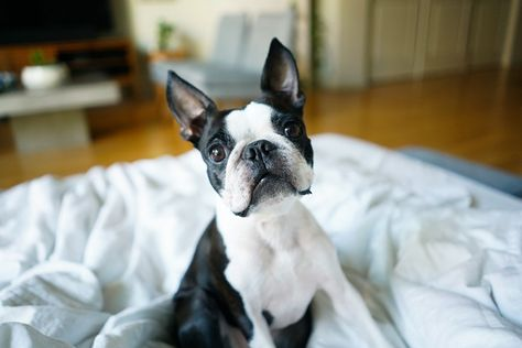 How To Rent A Dog Friendly Apartment Dog Friendly Apartments Dog Friends Dogs