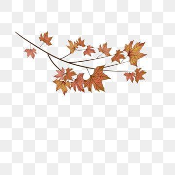 Autumn Leaf Branch Maple Leaf Red Maple Leaf Maple Leaf Clipart Leaves Autumn Leaves Png Transparent Clipart Image And Psd File For Free Download Leaf Illustration Flower Png Images Leaf Clipart