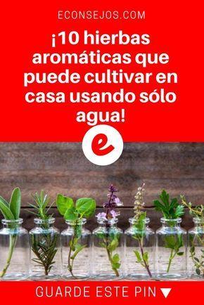 10 Hierbas Aromáticas Que Puede Cultivar En Casa Usando Sólo Agua Cultivar Hierba Jardín De Productos Comestibles Jardineria Y Plantas