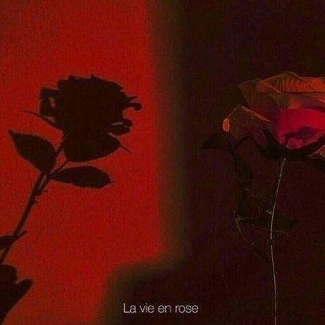 Red Flowers Sur Son Refler Com Imagens Imagem Vermelha
