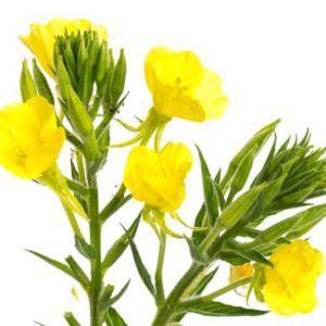 Prozdrowotne Rosliny Doniczkowe Ktore Warto Miec W Domu Karodos Plants