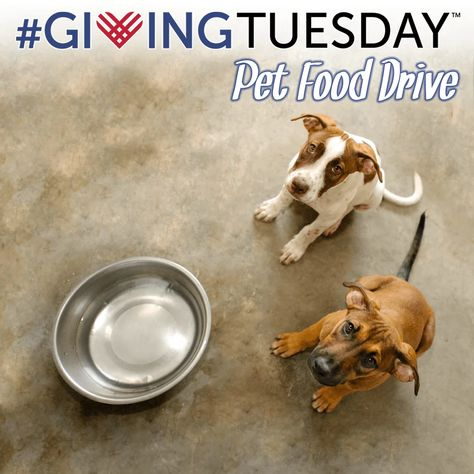Holiday Food Drive for Homeless Pets #animalrescue GivingTuesday: Food Drive for Homeless Pets | The Animal Rescue Site
