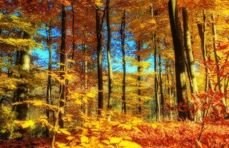 fall season forests wallpaper id 2034578 desktop nexus nature rh pinterest ie