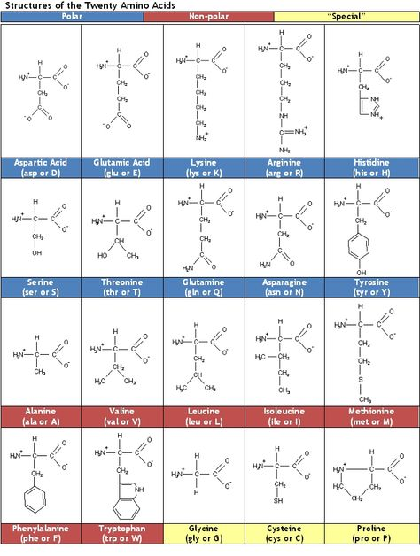 Amino Acid Chart Periodic Table Chart Unique And Charts On