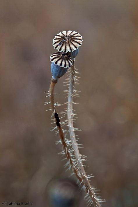 ♂ Blue plants in love (lids)