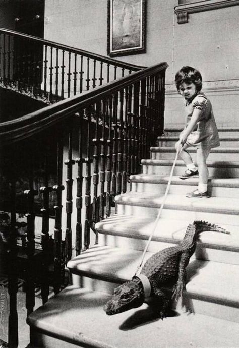 Writing Prompt: I wanted a puppy, but my dad brought me a crocodile for my birthday. Tell about the adventures or problems of having this pet. (a fun prompt for Lyle, Lyle Crocodile) Old Pictures, Old Photos, Vintage Pictures, Funny Pictures, Funny Pics, Ansel Adams, Dog Walking, Vintage Photographs, Belle Photo