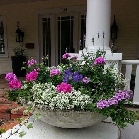 Tampa Container Gardening for Indoor and Outdoor Needs – Pflanzideen Beautiful Flowers, Flower Pots, Container Gardening Vegetables, Plants, Container Gardening Flowers, Container Flowers, Flower Garden, Gardening For Beginners, Garden Design