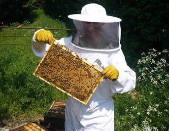 دراسة جدوى جاهزة لمشروع منحل لإنتاج عسل النحل مشروع Picnic Blanket Picnic Outdoor Blanket