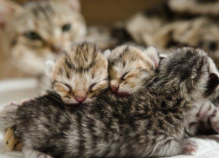 Help My Cat Is Having Kittens Cat Having Kittens Newborn Kittens Kitten Pictures
