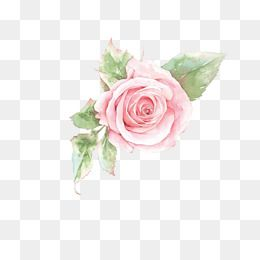 Pink Rose Flower Rose Clipart Flower Clipart Flowers Png Transparent Clipart Image And Psd File For Free Download Rose Clipart Flower Clipart Pink Rose Flower