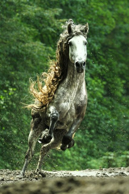 Horse - cool picture