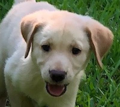Adopt Lexi 9 On Petfinder Dog Adoption Help Homeless Pets