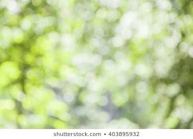 Abstract Green Nature Background With Blurry Bokeh Defocused Lights Blurred Background Bokeh Abstract