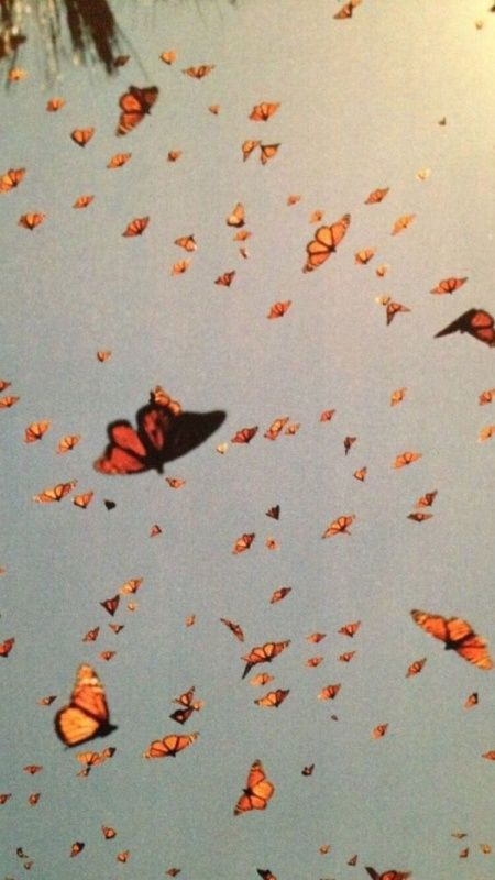 Vsco Happinessinpixels Butterfly Wallpaper Aesthetic Iphone