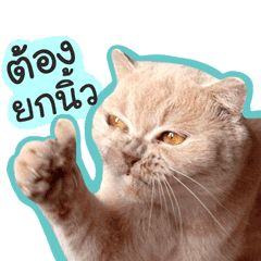เหม ยวจอมกวน ก บหน าฮาๆของเขา ในป 2021 ภาพส ตว ตลกๆ ภาพขำๆ ร ปแมวขำๆ