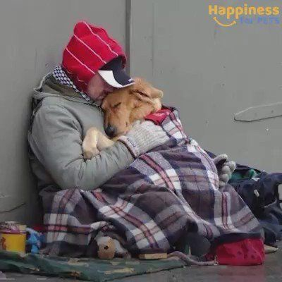 """Capt.Harry on Twitter: """"Dogs Don't Care How Much You Have, They Just Love You For Who You Are ❤ https://t.co/CjYT9nBpfd"""""""