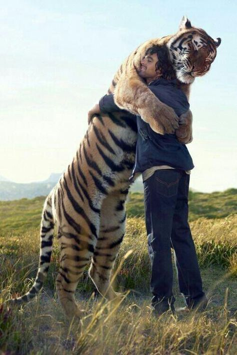 "South African naturalist Kevin Richardson hugging the tiger. He explains that when it comes to affection, tigers tend to be more demanding and insistent.. ""Quite often they won't take no for an answer:"""