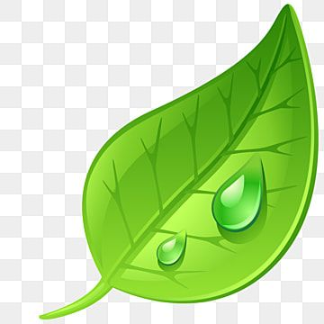 Leaf Png Images Vector And Psd Files Free Download On Pngtree In 2021 Leaves Vector Plant Vector Leaf Clipart
