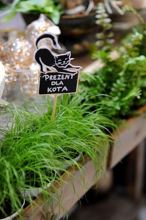 Rosliny Doniczkowe Bezpieczne Dla Zwierzat Ogrod Lobzow