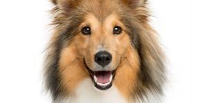 Todas Las Razas De Perros Nombres Fotos Y Características Página 3 Razas De Perros Perros Razas De Perros Grandes