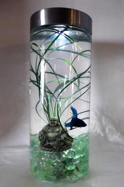 Buddha Bubbler Tank. Lighted with under gravel bubbler, live plant ...