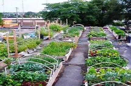 bda2e065354a95356324882fdfbd91e5 - Best Vegetable Gardens In The World