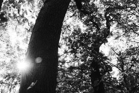 fotografie Sunflare! @ @ @ #wiebepekema...