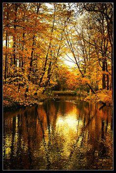 Golden nature. Parc de la Tête d'Or, Lyon, France.