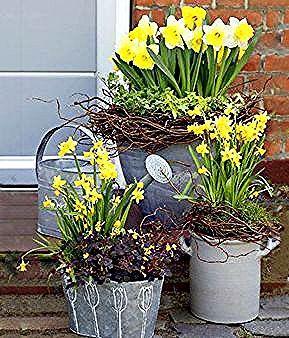 Narzissen Im Topf Oder Im Garten Richtig Pflanzen Pflegen Und Als Vasenblumen Arrangieren Daffodils Red Rose Flower Flowers