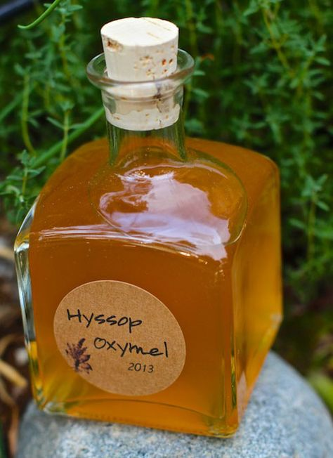 How to Make Hyssop Oxymel to Fight Colds, Flu and Bronchitis ... http://herbsandoilshub.com/how-to-make-hyssop-oxymel-to-fight-colds-flu-and-bronchitis/