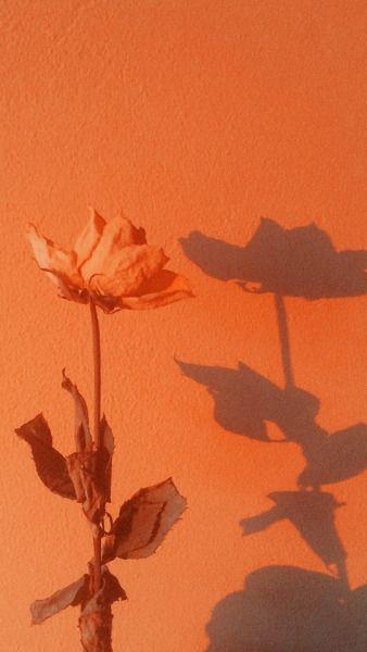 Download 970+ Wallpaper Tumblr Orange Gratis Terbaik