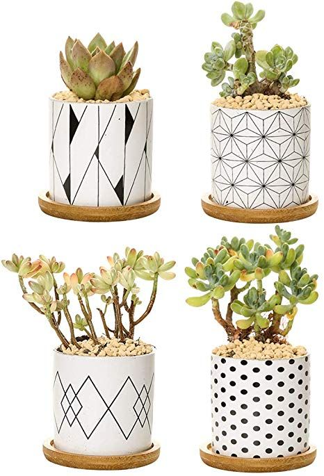 Amazon Com 2 8 Inch Plant Pots Cylinder Ceramic Succulent Planter With Bamboo Tray In 2020 Ceramic Succulent Planter Succulent Planter Ceramic Succulent