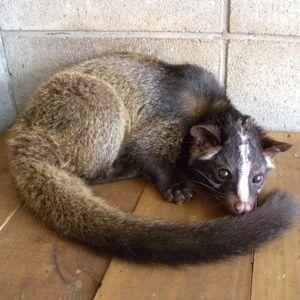 川崎市 ハクビシン 哺乳類 動物公園 動物