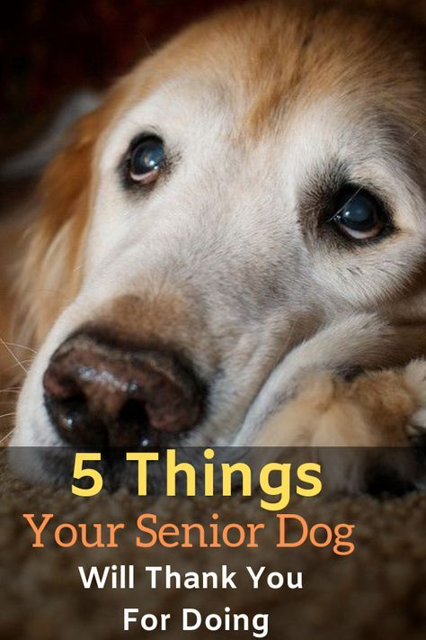 5 Things Your Senior Dog Will Thank You For Doing Dogspaceblog In 2020 Senior Dogs Care Elderly Dog Care Elderly Dogs