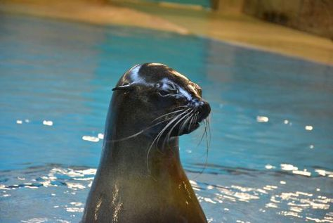 Sea Lion Point Atlantis the Palm   Your Guide to Atlantis The Palm   The Vacation Builder