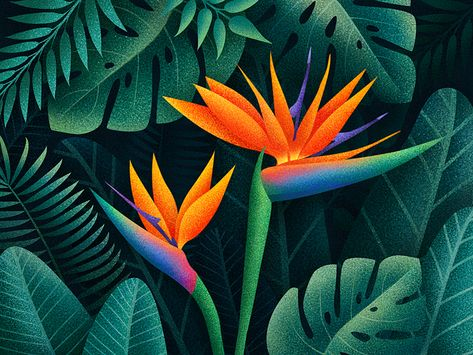 Bird Of Paradise Flowers Paradise Flowers Paradise Painting Birds Of Paradise Plant