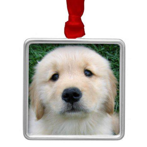 Golden Retriever Puppy Christmas Ornament Zazzle Com With