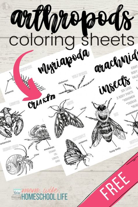 Arthropods Coloring Sheets Mom Wife Homeschool Life Homeschool Life Homeschool Homeschool Science Lessons