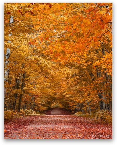 Door County Fall Foliage In 2020 Fall Foliage Metal Prints Canvas Art Prints