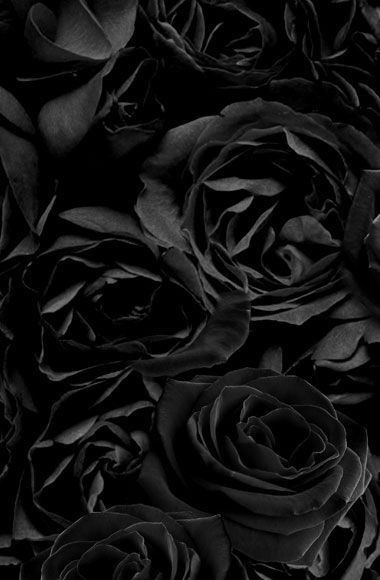 Black Roses Black Roses Wallpaper Black Rose