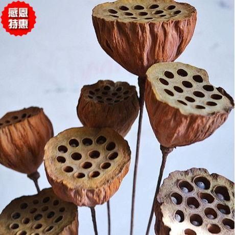 Natural dried lotus seeds with mini lotus flower backdrop floral bouquet decorated living room coffee table