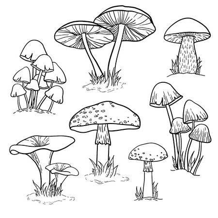 T-33 istruzione grafico Poster dei funghi funghi BOTANICA ART SETA 30 24x36