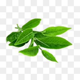 Green Tea Leaves Tea Anhua Black Tea Black Tea Green Leaves Leaf Green Leaves Anhua Black Green Clipart Tea Clipart Leav Green Leaf Tea Tea Leaves Leaf Clipart