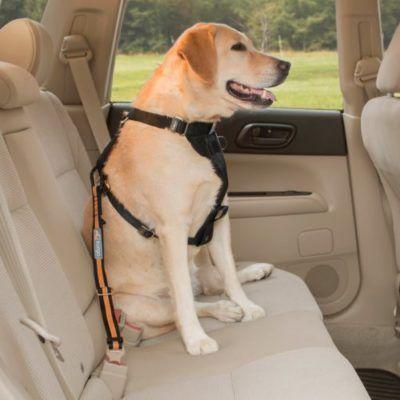 Product Spotlight: Seatbelt Tether Car Restraint   Keep Dog