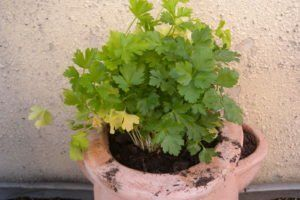 Zimt Im Garten Ein Sinnvoller Pflanzenschutz Plantura Ein Garten Pflanzenschutz Pla In 2020 Pflanzen Pflanzenschutz Ameisen Im Garten
